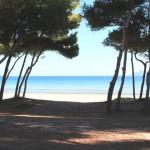 Strandzugang Penthaus in der 1.Meereslinie zum kilometerlangen Sandstrand der Playa de Muro