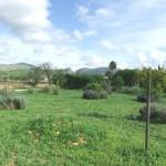 Finca Llucmajor mit mediterran angelegten Garten